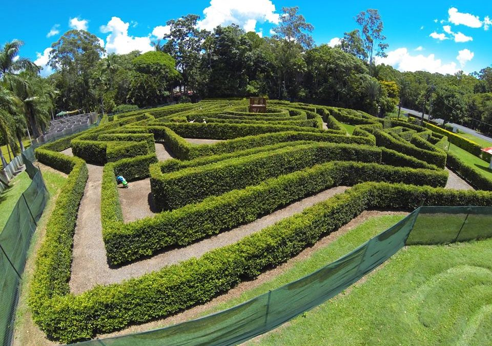 Find Your Way Through Bellingham Maze, A Fun Day Out for the Family
