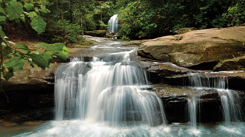Explore Buderim Forest Park Near Our Motor Lodge Sunshine Coast Motel