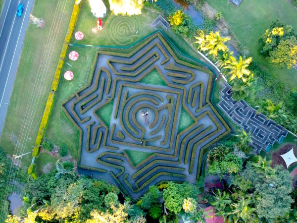 Hedge Maze Photo From Bellingham Maze Website