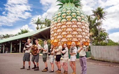 Book Sunshine Coast Woombye Accommodation Near Wildlife HQ Zoo