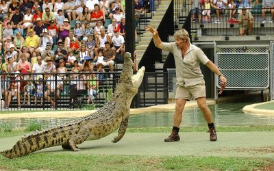Enjoy an Unforgettable Day Out at Australia Zoo for Steve Irwin Day